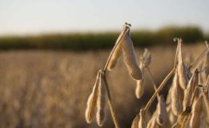 海关总署:埃塞俄比亚输华大豆可正式向我国出口