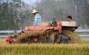 农业农村部:今年粮食将稳定在12000亿斤以上