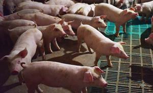 遼寧省營口市大石橋市和老邊區非洲豬瘟疫區解除封鎖