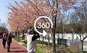 360°全景|綠溢上海:花園綠地和黃浦濱江綠道長線串珠
