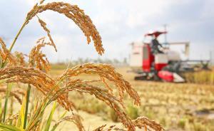 """绿色安全精致的""""菜篮子""""下周来沪推介,南通千余农产品参展"""