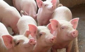 农业农村部:海南省儋州市和万宁市发生非洲猪瘟疫情