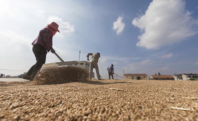 經濟日報評今年夏糧豐收意義:應對國際風險挑戰有了充足底氣