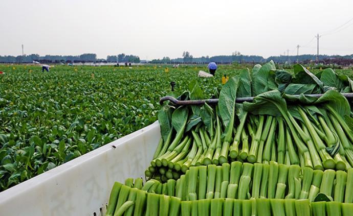 6月份全國批發市場28種蔬菜批發均價環比下跌7.5%