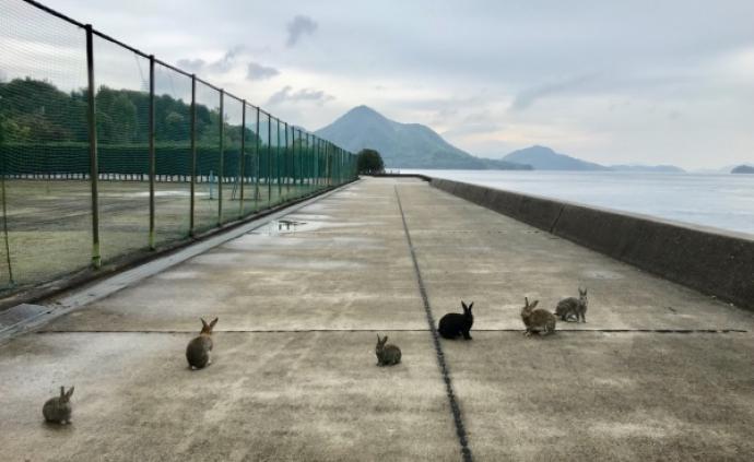 """日本""""兔子島""""之行:一半是可愛,一半是死亡"""