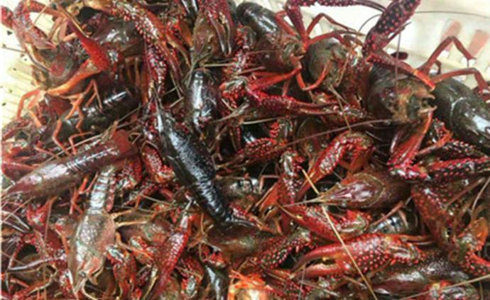 網紅蝦店前員工冒充采購經理騙數萬斤小龍蝦,倒賣用來賭博