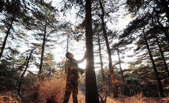 从黑发到白头:山西发鸠山林场一护林员守护数万亩山林34年