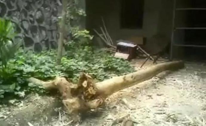 国家林业和草原局督办海南滥砍盗伐珍稀树种案