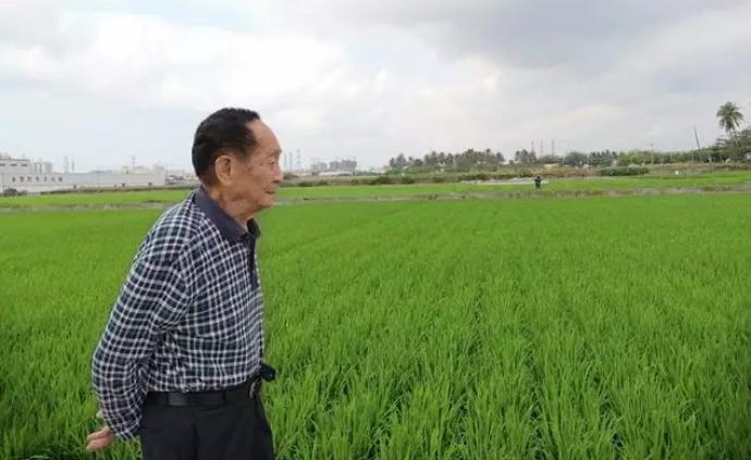 今天袁隆平院士90歲:依然管不住邁向稻田的腿