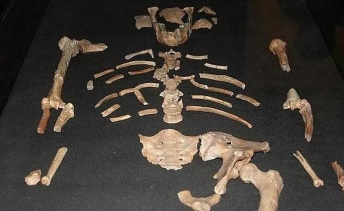 """世界各地最早古人类是谁:图迈""""辈分""""最高,距今700万年"""