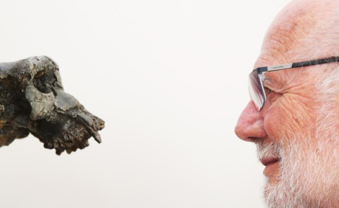 """人猿揖别:700万年前的""""岔路口"""",他走向人类这边"""