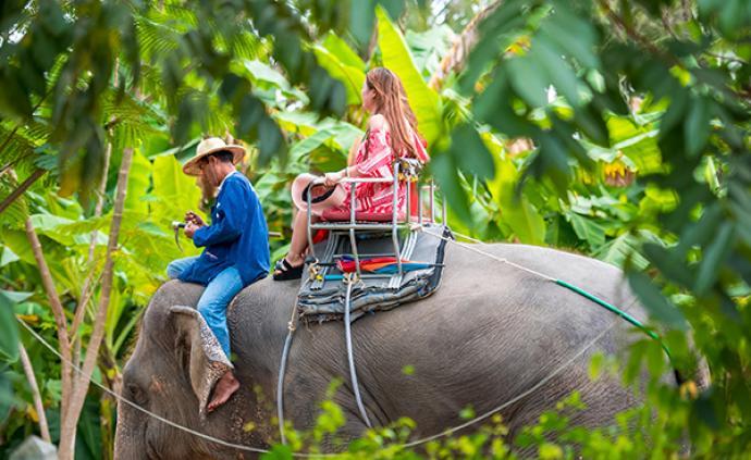 世界大象日:中国游客在泰国骑大象人数下降