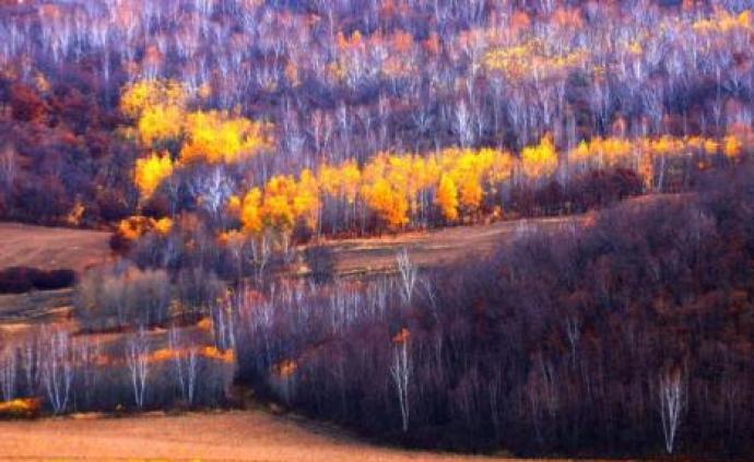 國家林業和草原局:全面停止天然林商業性采伐