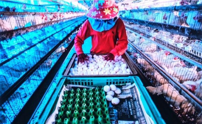 """""""中國肉食地圖"""":山東河南動物產品產出最多,廣東消費最多"""
