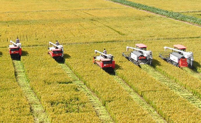 """農業農村部:中國農民豐收節不表述為""""第幾屆"""",可冠以年份"""