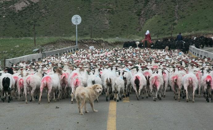 祁连山国家公园︱进退之间的传统牧区