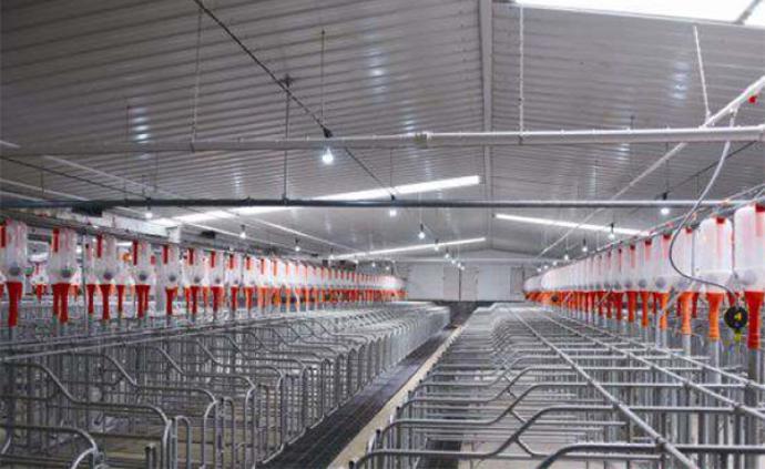 总理再次要求落实猪肉保供稳价措施,纠正不合理禁养限养规定
