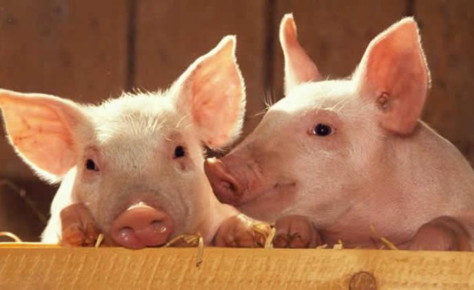 苏州出台意见稳定生猪生产,确保养殖总量只增不减