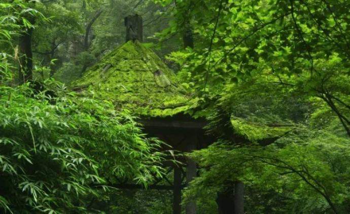 自然散步   岳麓山之夏