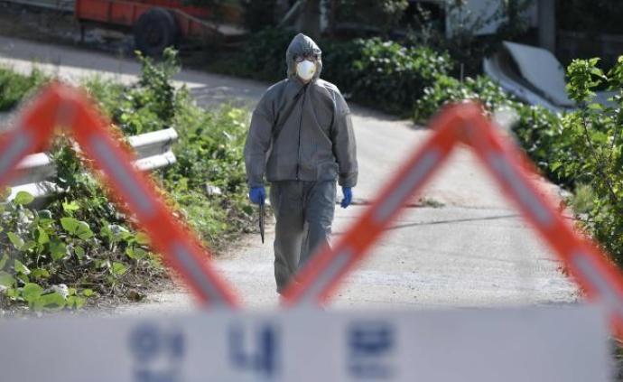 韩国1周内确认第4起非洲猪瘟感染病例,均在京畿道地区