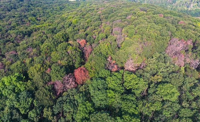 全球城市觀察︱未來四年,德國將投入最高8億歐元以修復森林