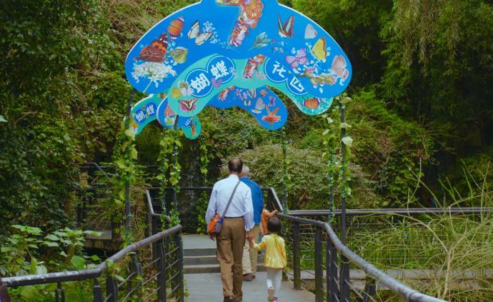上海动物园蝴蝶展上8万只蝴蝶翩飞,展览重视科教、珍视乡土