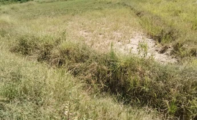 江西弋陽耗641萬打造高標準農田,一年后500畝荒草叢生