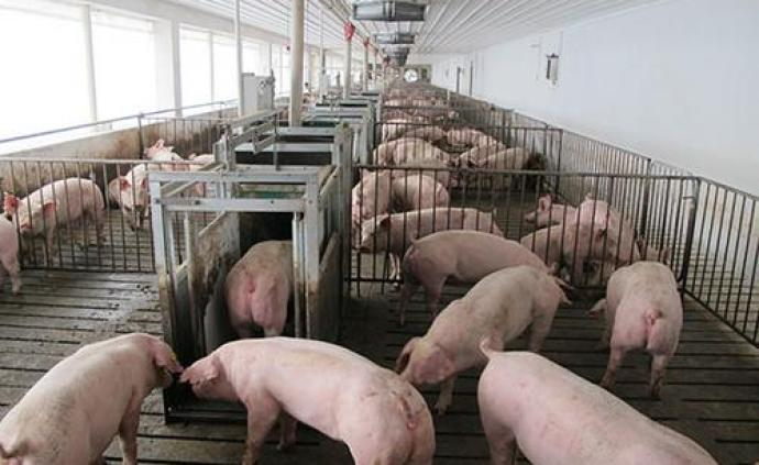 農業農村部:當前非洲豬瘟疫情發生勢頭明顯減緩