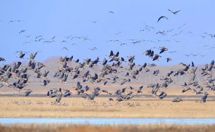 国家林草局部署候鸟等野生动物保护工作,邀纪检机关监督检查