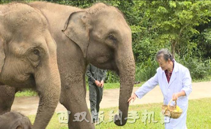 """""""亚洲象栖息地保护碳汇项目方法与研究""""项目在西双版纳开展"""
