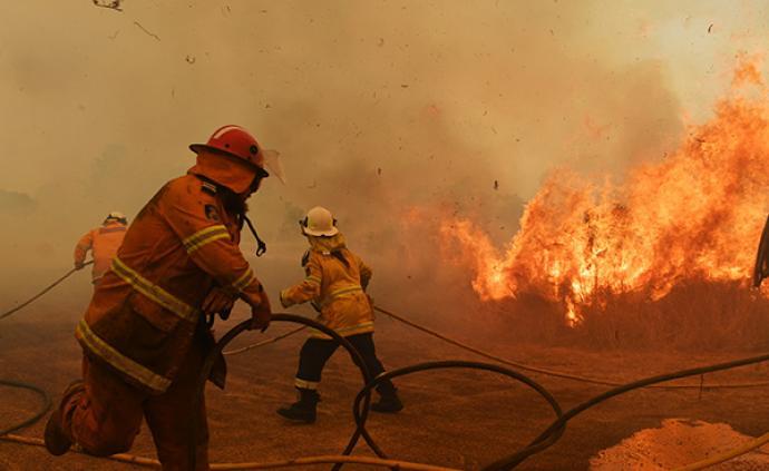 澳大利亞東部大火不斷,數百只考拉遇難