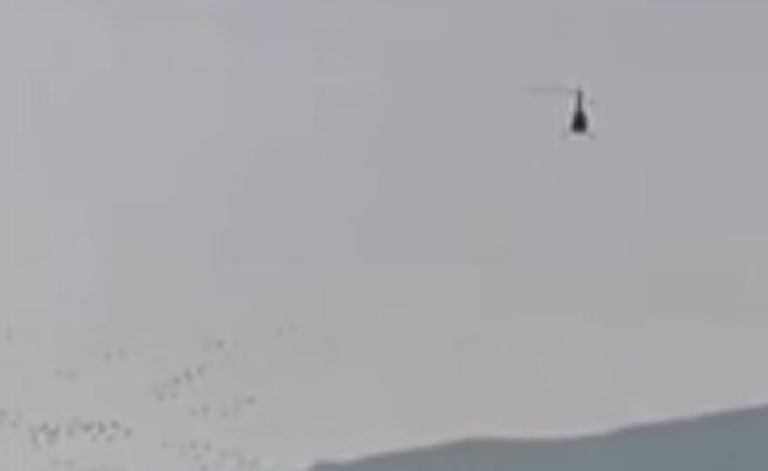 私人直升机飞临黄河湿地惊扰天鹅,调查?#21697;?#34892;员私自改变航线