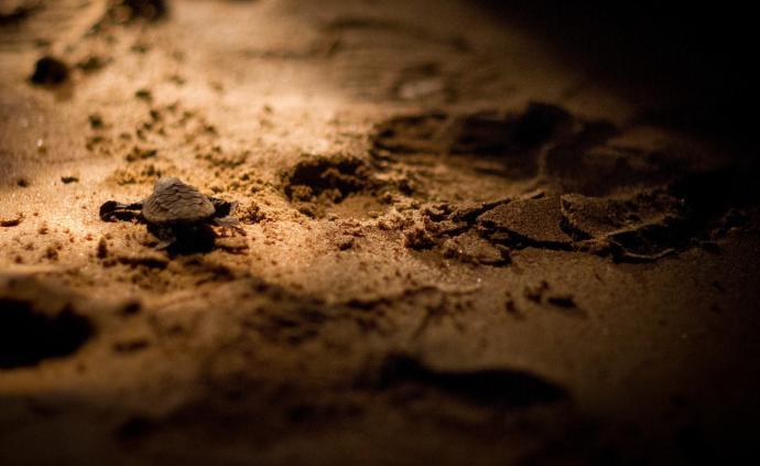 是時候去澳洲看海龜洄游奇景了