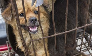浙江最大毒狗肉案:17人制售超38吨,毒狗者自称不吃狗肉