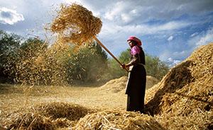 新知丨最新研究证实:中国西藏是大麦另一起源地