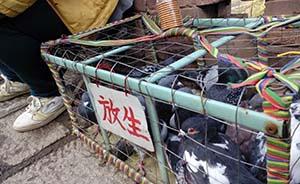 五台山放生动物的生意链:摊贩称部分售出动物放生后还能收回