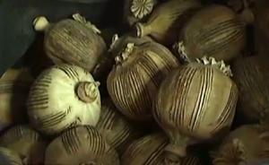 央视暗访罂粟壳调味品,记者欲购买被批发商索要身份证复印件