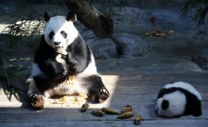 中国将首次立法认可动物福利,已写入野生动物保护法修订初稿
