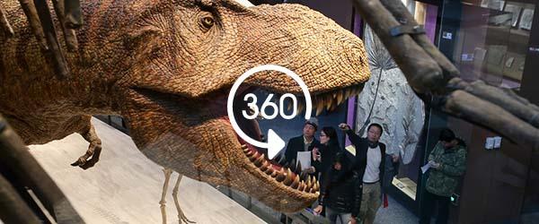 """再现""""恐龙盛世"""",上海自然博物馆新馆预计明年正式开馆"""