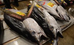 蓝鳍金枪鱼的天价诱惑:央企中粮看上浙江民企