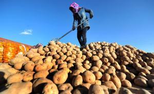 农业部发文力挺马铃薯产业开发,多地争相启动主粮化规划