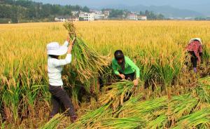 院士评出2014年中国十大科技进展,超级稻亩产千公斤入选