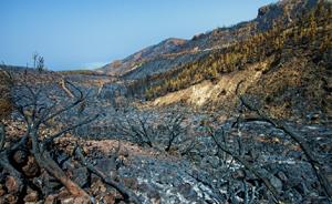 前四月全国森林火灾2300多起,死亡40人