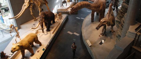 上海自然博物馆新馆4月19日起向公众开放