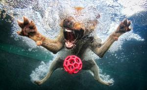 趣看|落水狗,一场汪星人的慢镜头秀