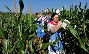 转基因生物有违规扩散,农业部时隔5年再发文要求严管