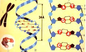 为何我们读了高中生物教材,还是搞不懂转基因?