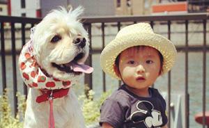 新井一二三专栏:日本LOSS一代——从宠物、《海女》到母亲