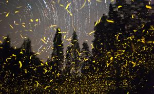 为什么大多数城里人没见过萤火虫?
