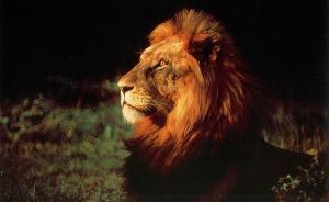 """杭州以""""狮子""""治吏:打造""""狮子型""""班子,干部要敢于担当"""